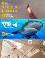 Galeria+Sharks+130 anos