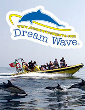 Dream Wave 2015 - Insónia – Grutas e Golfinhos