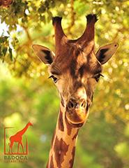 Visita Badoca Safari Park 2015