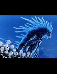 Sábados em Família: MONONOKE HIME / Princesa Mononoke