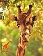 Visita Badoca Safari Park 2018