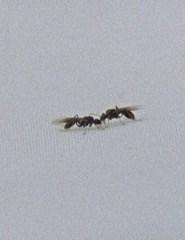 PORTO POST DOC 2018 -  The Mount of Ants