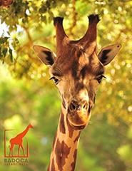 Visita Badoca Safari Park 2019