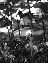 Circuito | À escuta das plantas