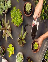 Plantas medicinais no ayurveda: conteúdos e aplicações