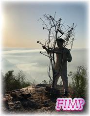 Fernando Mota - Concerto para uma árvore