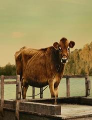 First Cow – A Primeira Vaca da América